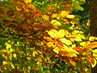 Podzim hraje barvami