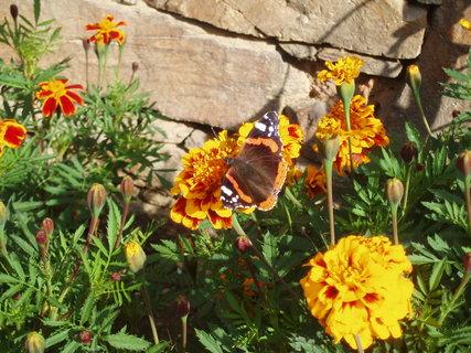 FOTKA - Motýl v Afrikánech 1