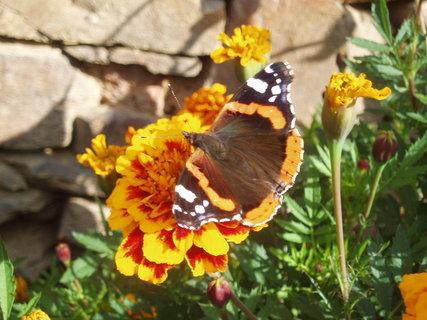 FOTKA - Motýl v Afrikánech 3