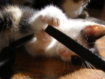 FOTKA - kotě hračička
