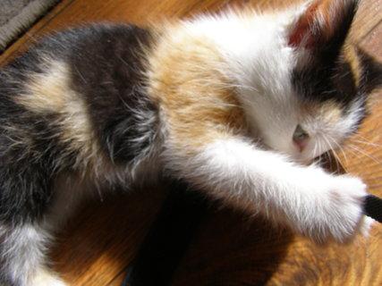 FOTKA - kotě hračička*