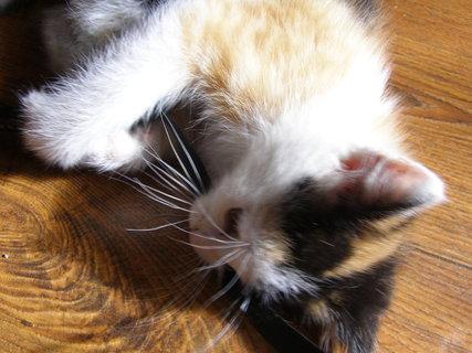 FOTKA - kotě hračička+