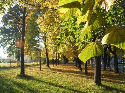 FOTKA - Podzim II