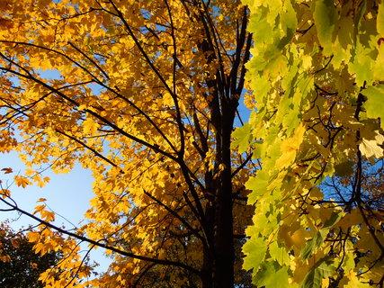 FOTKA - Podzim III