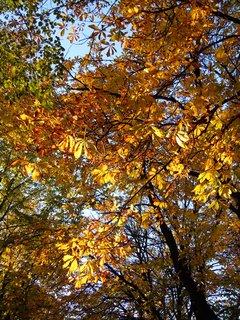 FOTKA - Podzim V
