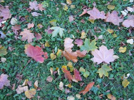 FOTKA - Podzim VI