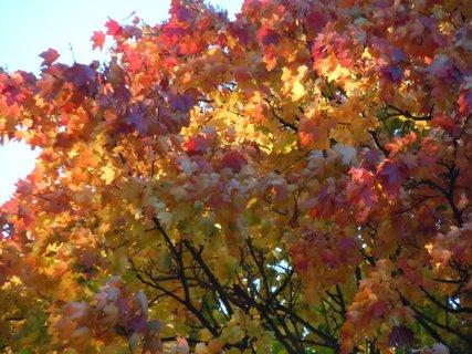 FOTKA - Podzim VII