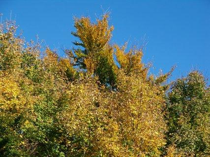 FOTKA - Podzim.
