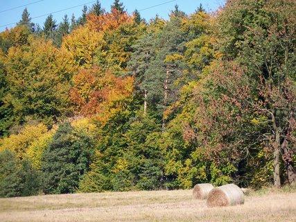 FOTKA - Podzimní melír