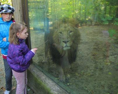 FOTKA - Děvčata a lev