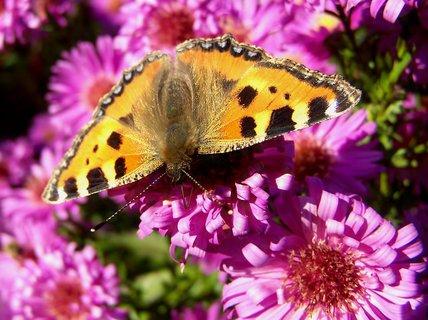 FOTKA - Krásné tělo motýla