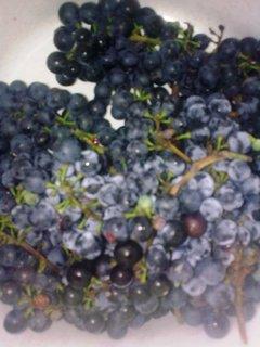 FOTKA - Domácí  víno