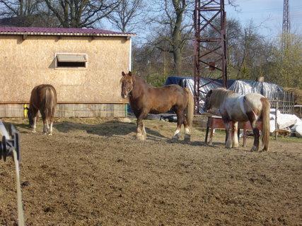 FOTKA - U koní..,