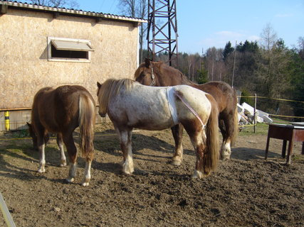 FOTKA - U koní..,,