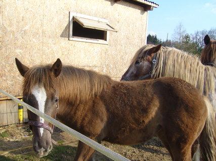 FOTKA - U koní..,,,