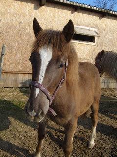 FOTKA - U koní..,,,,