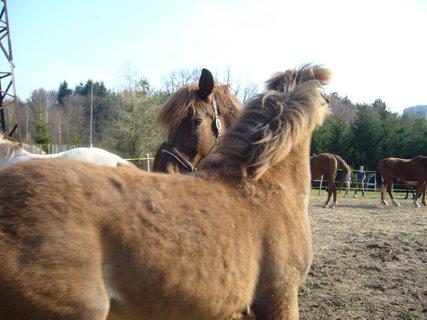 FOTKA - U koní..,,,,,