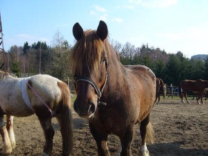 FOTKA - U koní..,,,,,,