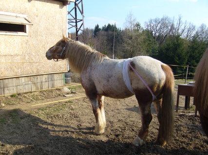 FOTKA - U koní..,,,,,,,