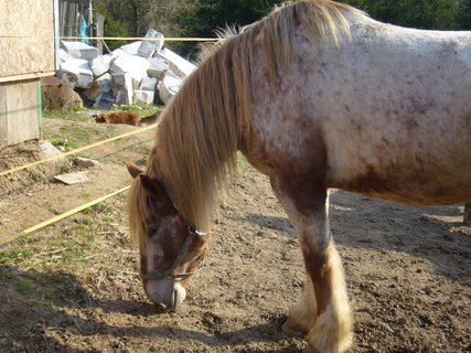 FOTKA - U koní...,