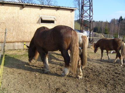 FOTKA - U koní...,,,