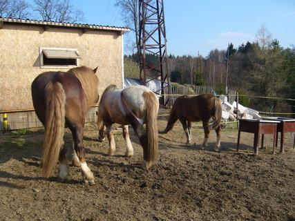 FOTKA - U koní...,,,,