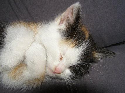 FOTKA - spím..
