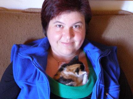 FOTKA - Kočičí chůva