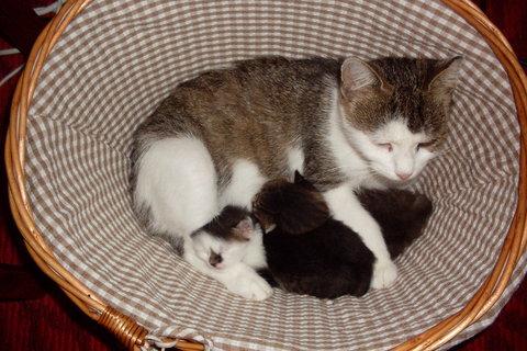 FOTKA - Minda v košíku s koťaty..