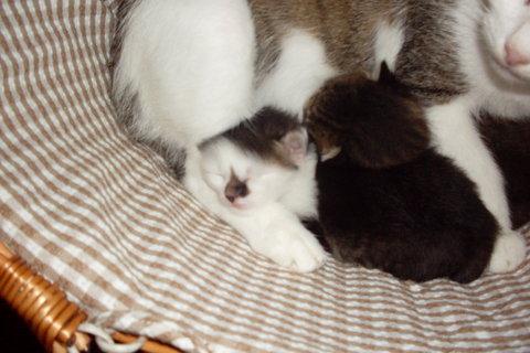 FOTKA - Minda v košíku s koťaty...