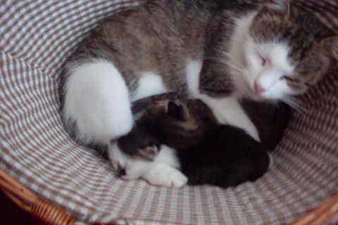 FOTKA - Minda v košíku s koťaty....