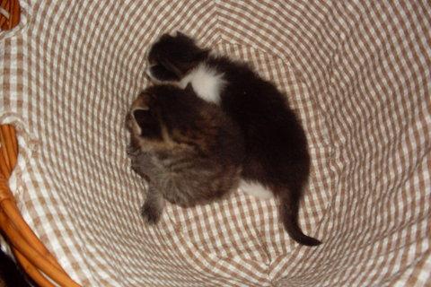FOTKA - koťátka nová 35