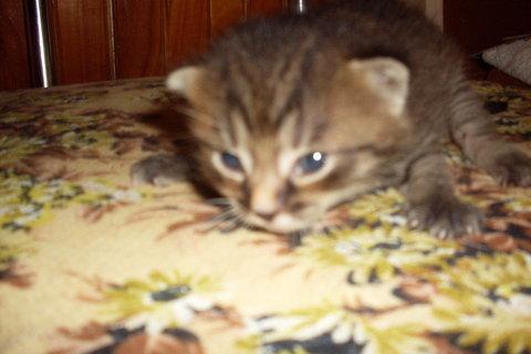 FOTKA - koťátka nová 36