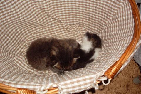 FOTKA - koťátka nová 38