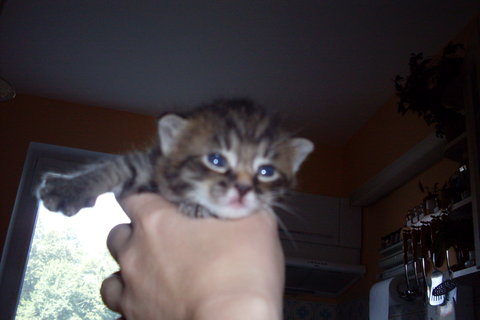 FOTKA - koťátka nová 42