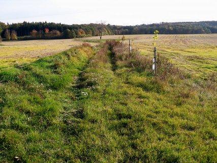 FOTKA - Cesta k lesu