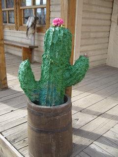FOTKA - Pořádný kaktus