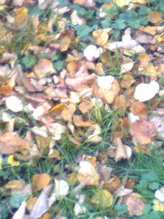 FOTKA - podzimní1.1.