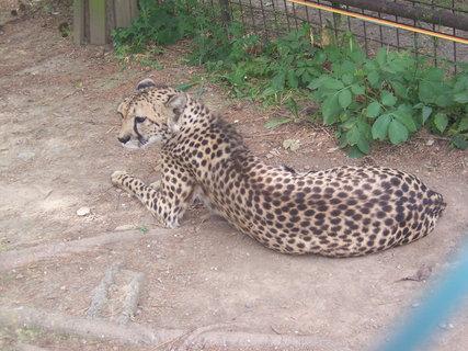 FOTKA - Zoo Olomouc 2