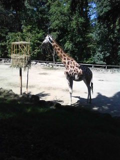 FOTKA - Zoo Lešná,.....