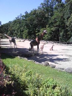 FOTKA - Zoo..