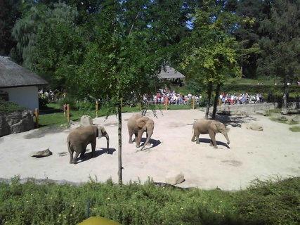 FOTKA - Zoo,