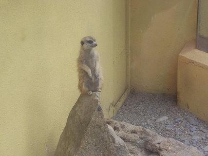 FOTKA - zoo 2