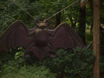 FOTKA - netopýr