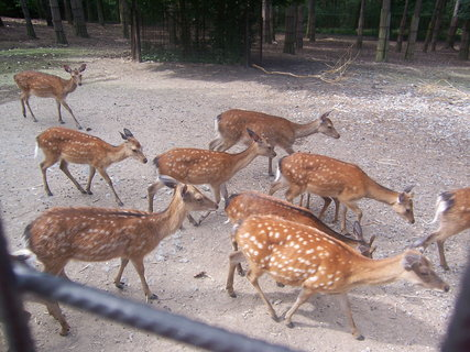 FOTKA - zoo 21