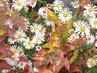 podzim u včelína