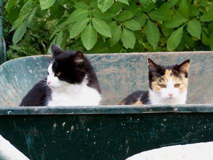 FOTKA - Na návštěvě za koťátky