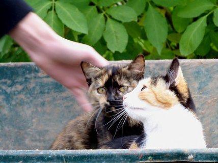 FOTKA - Na návštěvě za koťátky.