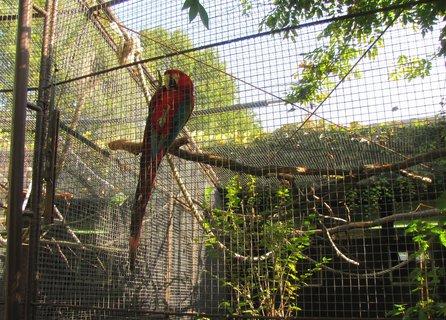FOTKA - Červený pták na kleci