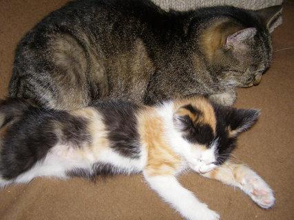 FOTKA - unavené kočičky